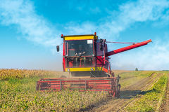 Soybean Harvesting Stock Photo