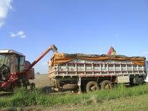 Soybean harvesting Stock Photos