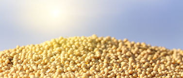 Soybean on heap Stock Photography