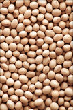 Soybean. Image of close up of soya beans background Stock Images