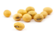 Soybean isolated Stock Image
