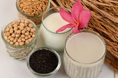 Soybean milk, soy, Black Sesame Seeds and Germinated brown rice (GABA). Royalty Free Stock Image
