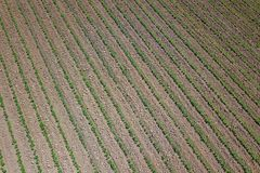 Soybean plantation. Aerial view of cultivated agricultural soybe. An field. Top view Spring time Stock Photos