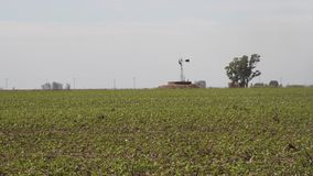 Soybean plantation in the Argentine countryside stock footage