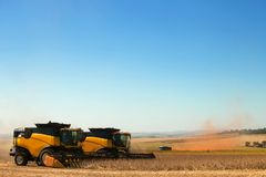 Soybean plants at harvest. Royalty Free Stock Photography