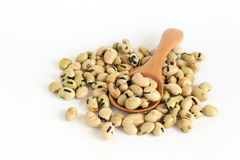 Soybean Sanck Royalty Free Stock Photos