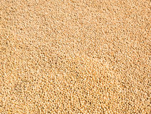 Soybean seed background Royalty Free Stock Image