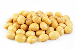 Soybean seed. On white background stock images