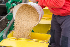 Soybean seeds in buckets before seeding at field. Stock Photo