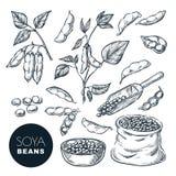 Soybean Stock Illustrations – 1,548 Soybean Stock ...