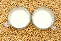 Soybean, soymilk, nutrition beverage Royalty Free Stock Images