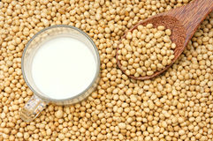 Soybean, soymilk, nutrition beverage Stock Photography