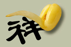 Soybean sprout Stock Photos