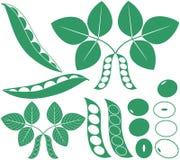 Soybean. Vector illustration (EPS 10 Royalty Free Stock Photo