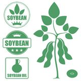 Soybean. Vector illustration (EPS 10 Royalty Free Stock Photography