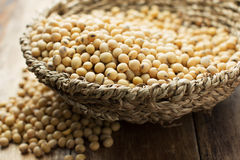 Soybean Royalty Free Stock Photo