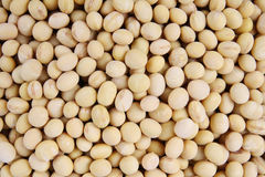 Soybeans Stock Photos