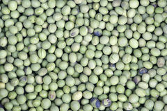 soybeans Royaltyfri Fotografi
