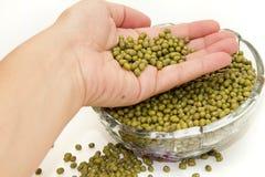 soybeans Royaltyfri Foto