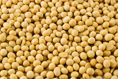 soybeans Royaltyfri Bild