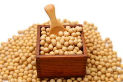 soybeans Imagens de Stock Royalty Free