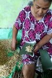 soybeans foto de stock royalty free