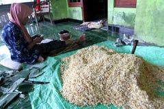 soybeans fotografia de stock royalty free