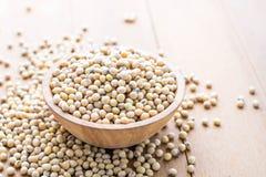 soybeans Arkivbilder