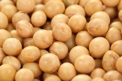 soybeans Arkivfoton