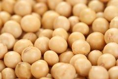 soybeans Royaltyfria Foton
