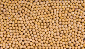 soybeans fotos de stock royalty free