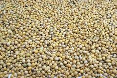 soybeans Royaltyfri Bild