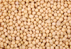 Soybeans Background Royalty Free Stock Photos
