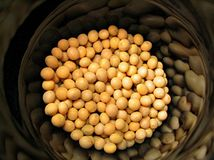 Soybeans in black container Royalty Free Stock Image