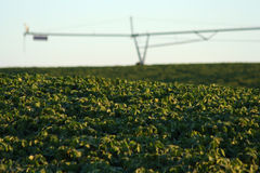 Soybeans and Center Pivot Royalty Free Stock Images