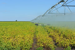 Soybeans and Center Pivot Royalty Free Stock Photography