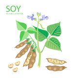 soybeans Ilustrações do vetor ajustadas em um fundo branco Proteína dos feijões de soja Fotos de Stock Royalty Free