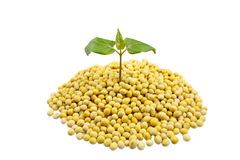Soybeans and leaves Stock Photo
