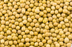 Soybeans Stock Photography