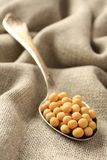 Soybeans in metal spoon on sackcloth background Stock Images