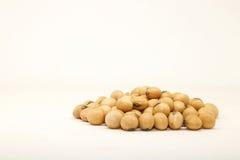 Soybeans på vitbakgrund soybeans Royaltyfria Bilder