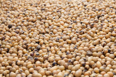 Soybeans seeds Stock Photo