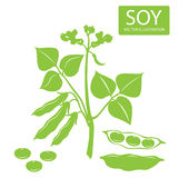 Soybeans silhouette. Vector illustrations set on a white background. Soybeans protein. Stock Photo