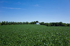 Soybeans and Solar Collectors Royalty Free Stock Images