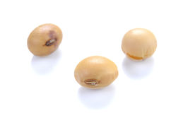 Soybeans sort on white background. Royalty Free Stock Image