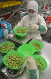 Soybeans Sorting Stock Photography