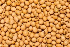 Soybeans Royalty Free Stock Photos