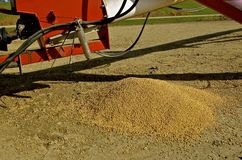 Soybeans spilled on the ground. Soybeans spilled out of the elevator hopper and left lying on the ground Stock Images