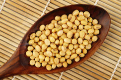 Soybeans  in wooden spoon Royalty Free Stock Image