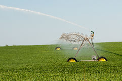 Soyean irrigation. An above ground irrigation system waters a soybean field Stock Photos